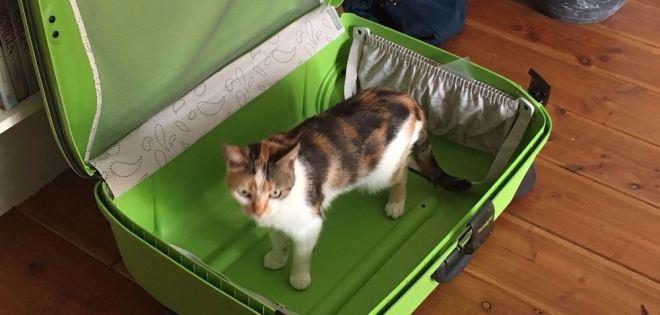suzie-in-koffer